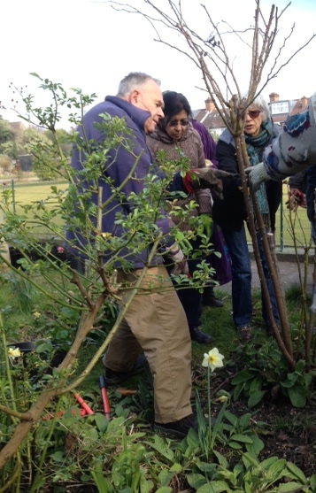 pruning2